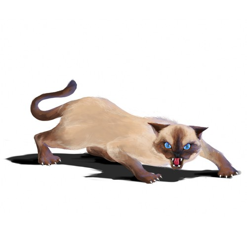 Realistic artwork with the title 'Tonkinese Cat'
