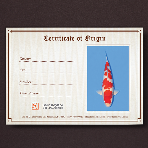 Aquarium design with the title 'Koi certificate'