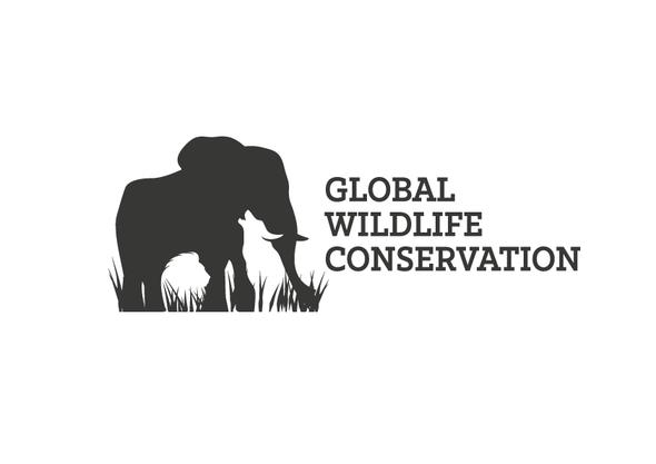 Safari design with the title 'Wildlife logo'