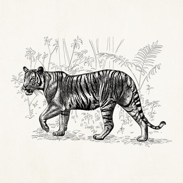Tiger artwork with the title 'Tiger illustration'