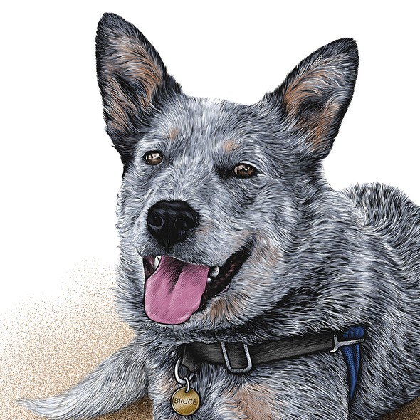 Pet illustration with the title 'Bruce'