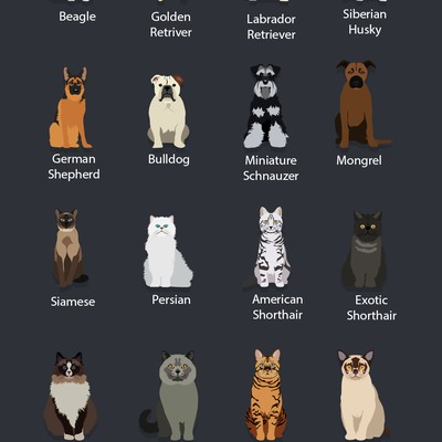 Dogs and Cats Flat UI Design