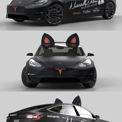 Turning Tesla into a Cat