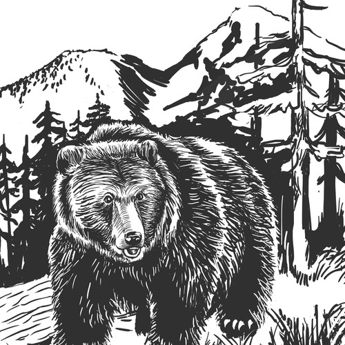 Bear artwork with the title 'B&W Book illustration'