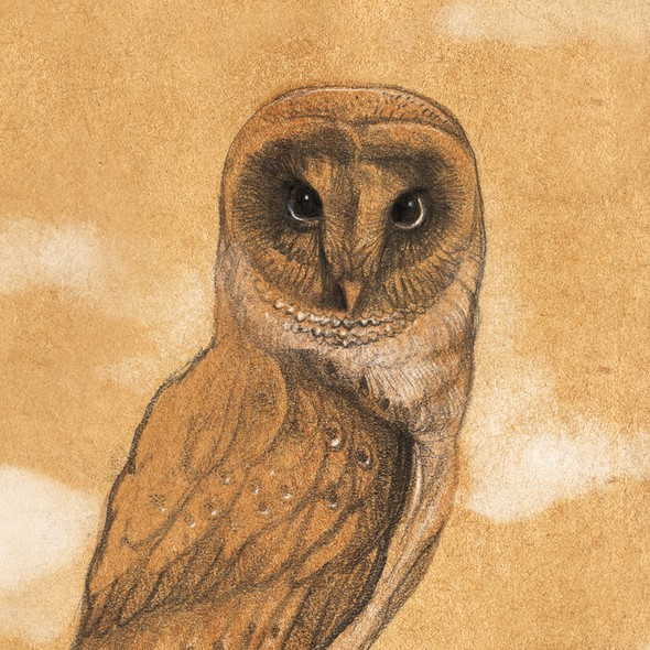 Owl illustration with the title 'Creative-Inspired-Magical-Illustration'