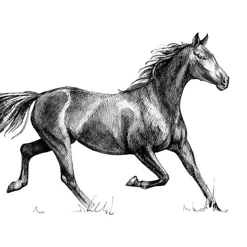 Horse illustration with the title 'Horse. Hand drawn sketch'
