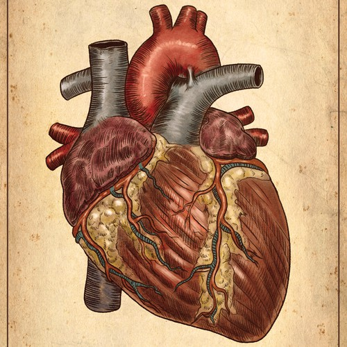 Heart illustration with the title 'a premium medical Illustration'