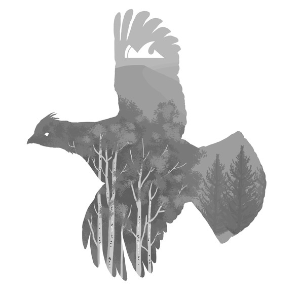 Spruce design with the title 'Grouse'