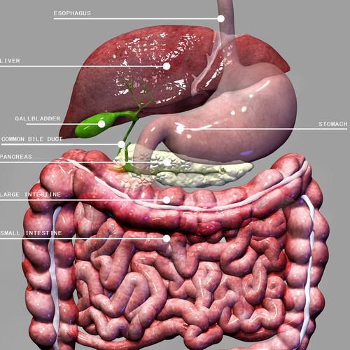 Anatomy illustration with the title 'ANATOMY'