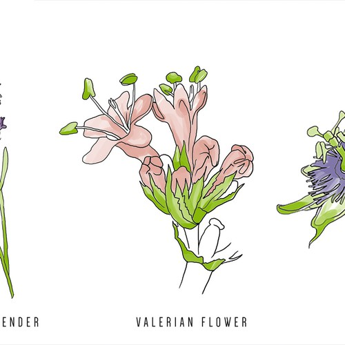 Floral artwork with the title 'Plants illustrations'