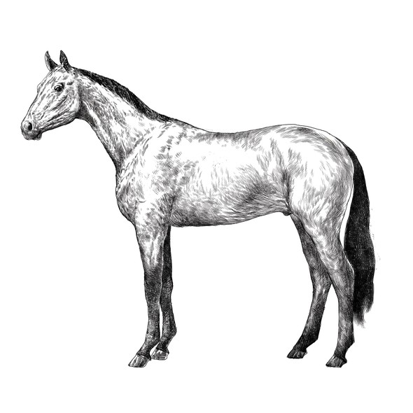 Environment artwork with the title 'Horse drawing'