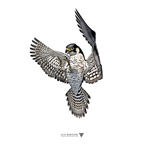 Painting artwork with the title 'Peregrine Falcon Sketch'