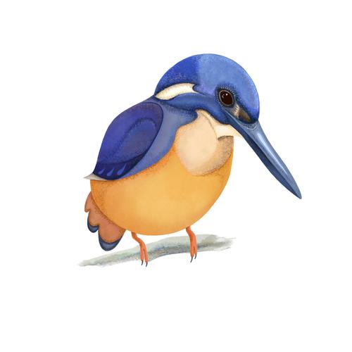 Digital artwork with the title 'Illustration of an Australian bird'