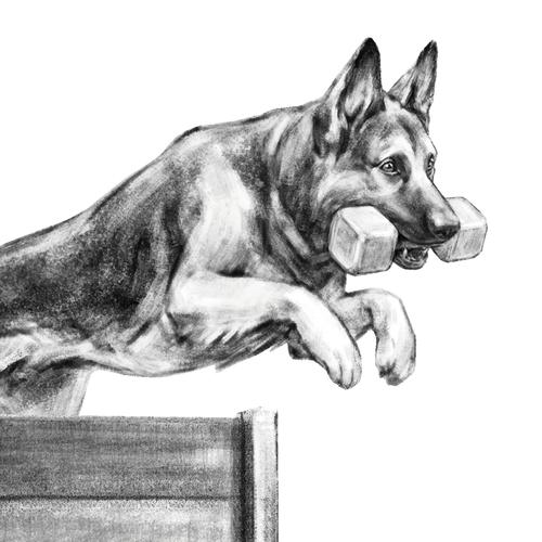 Pet illustration with the title 'Dog sports illustration.'