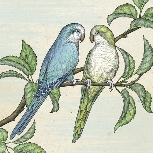 Branch design with the title 'Memorial illustration of parrot couple Pluto & Merlin.'