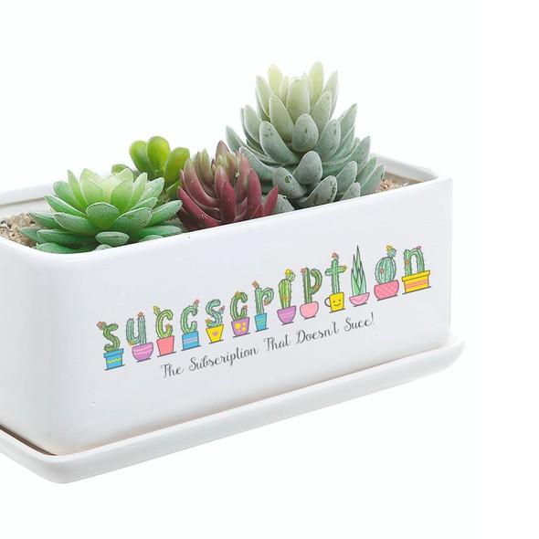 Succulent design with the title 'Succscripstion Logo Design '