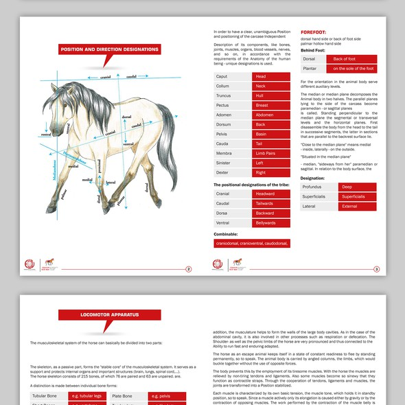 Catalogue design with the title 'Brochure Design'