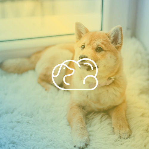 Bed logo with the title 'dog cloud'