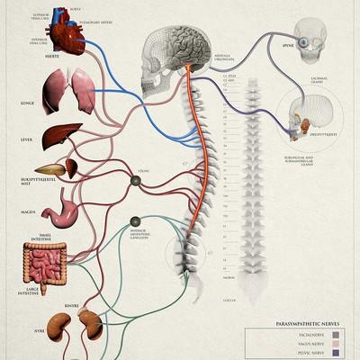 脊椎和神经图表例证为患者教育。