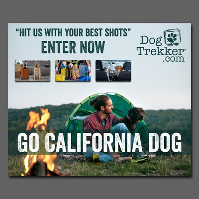 Banner for dog photo contest