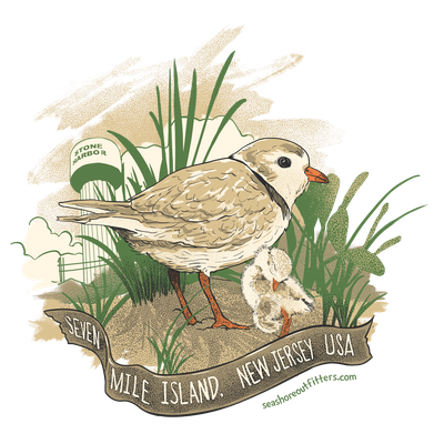 piping plovers for seashore outfitters