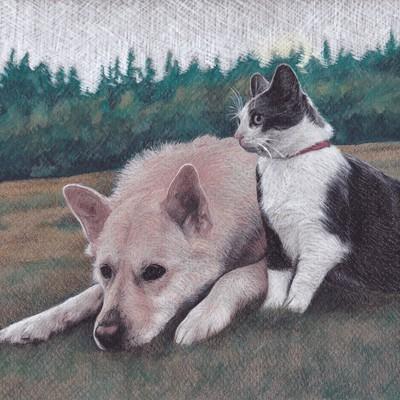 Pet sketch
