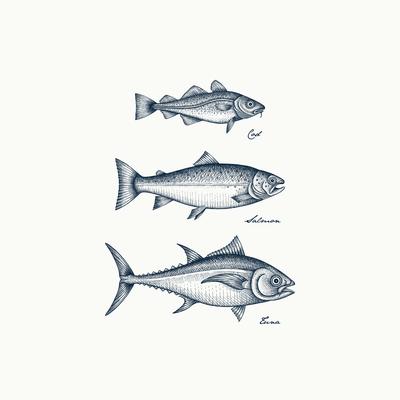 Cod • Salmon • Tuna