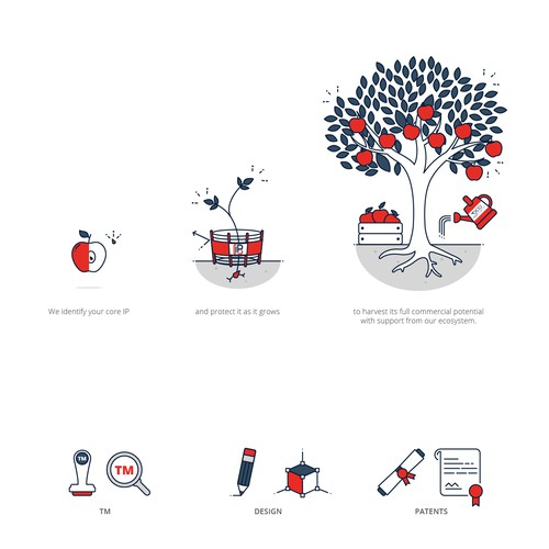 Simple illustration with the title 'Illustration of apple life cycle'