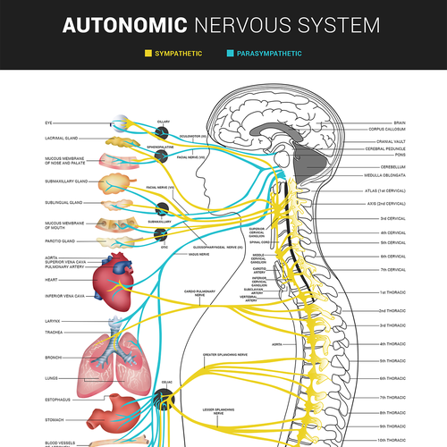 Bring our autonomic nervous system to life concurso cartaz design finalista por bence balaton ccuart Choice Image