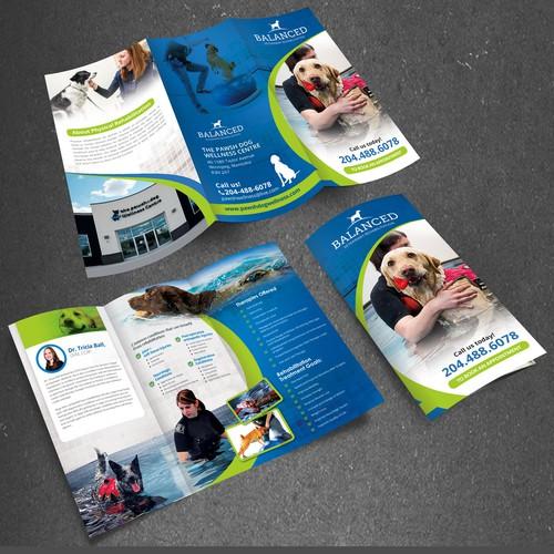 design a brochure for canine veterinary rehabilitation practice