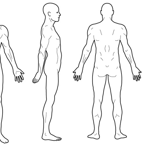 Body Diagram For Professional Massage Chart Front Back Left And