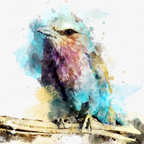 Design finalista por Andrea Carrot
