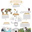 Infographic Design Infographic Designers Create