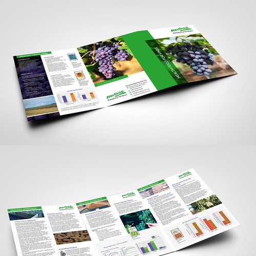 Diseño finalista de Dzine Solution
